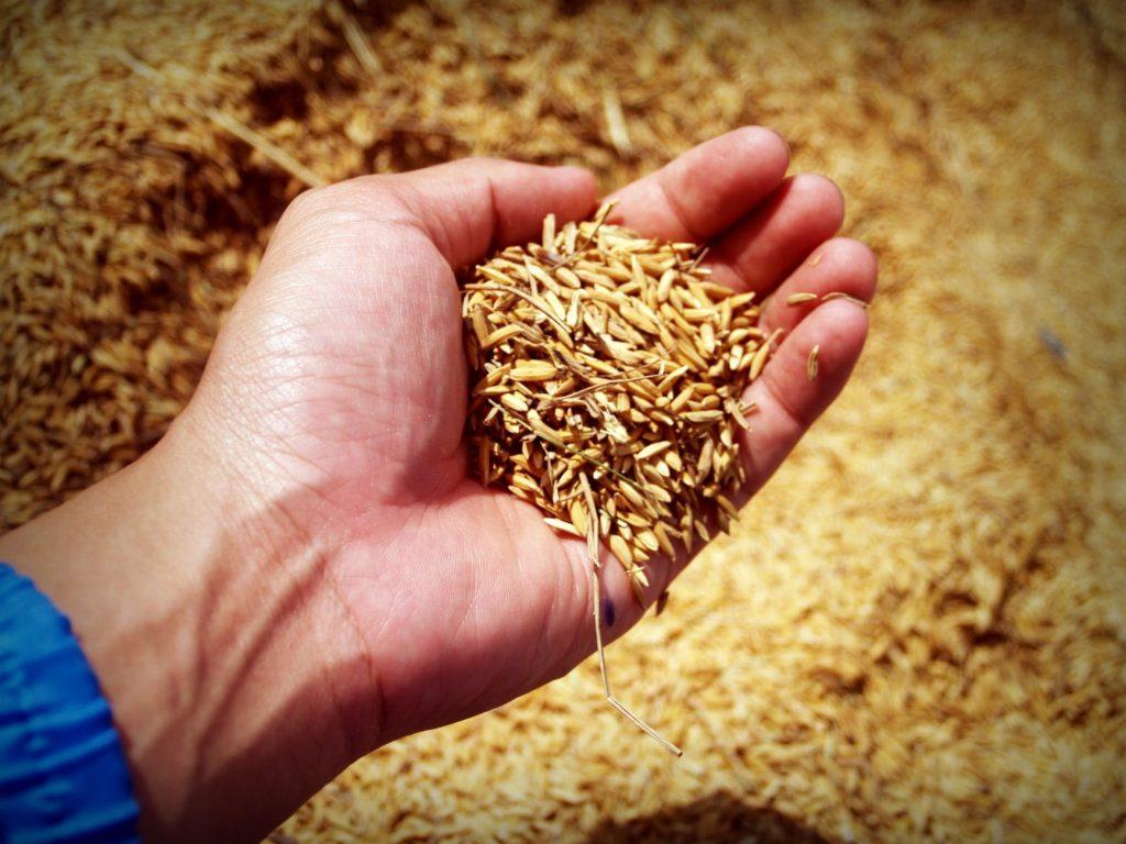 proteine del riso